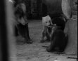 BEAR TRIPLETS BORN IN BERLIN ZOO