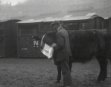 DINGWALL CATTLE AUCTION MARKET