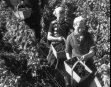 FRENCH GRAPE HARVEST